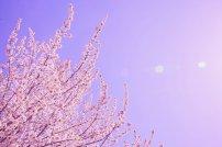 fototapeta w kwiaty